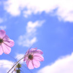 吉野家CM女優2019は元乃木坂46若月佑美!(動画あり)牛すき鍋膳売上に期待?